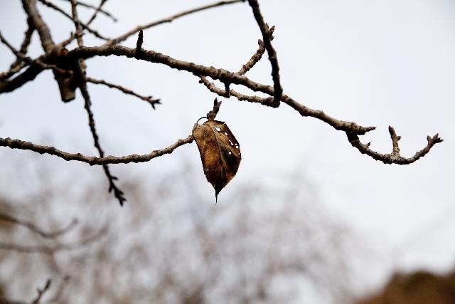 枯れ木に残る僅かな葉っぱ